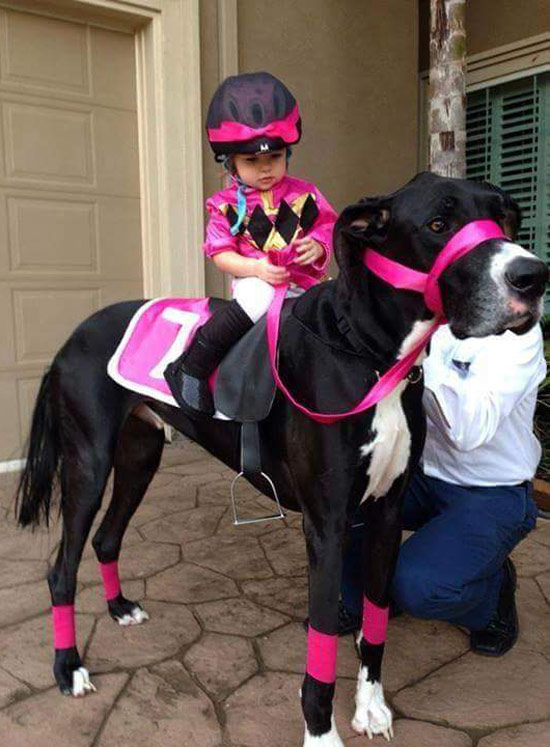 A jockey and her...