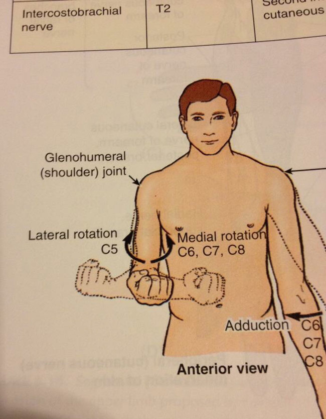The guy in my anatomy text book knows what's up