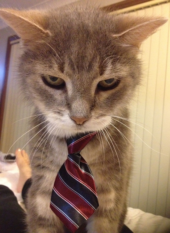My parents bought their cat a tie. He was not impressed