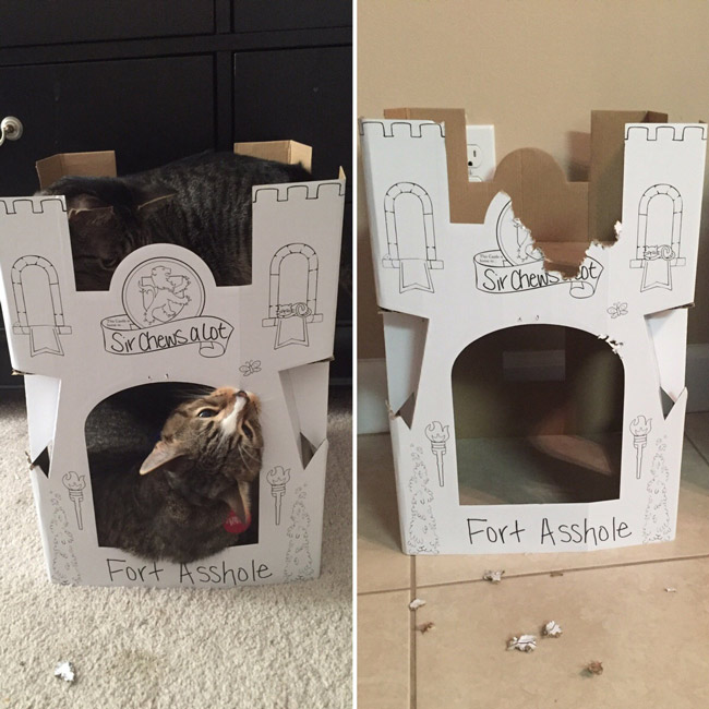 Bought my cats a castle today. A few hours later, I think I labeled it appropriately