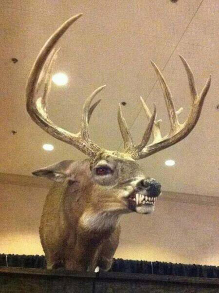 Behold....taxidermy at its finest