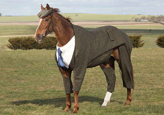 Horse in a tweed suit