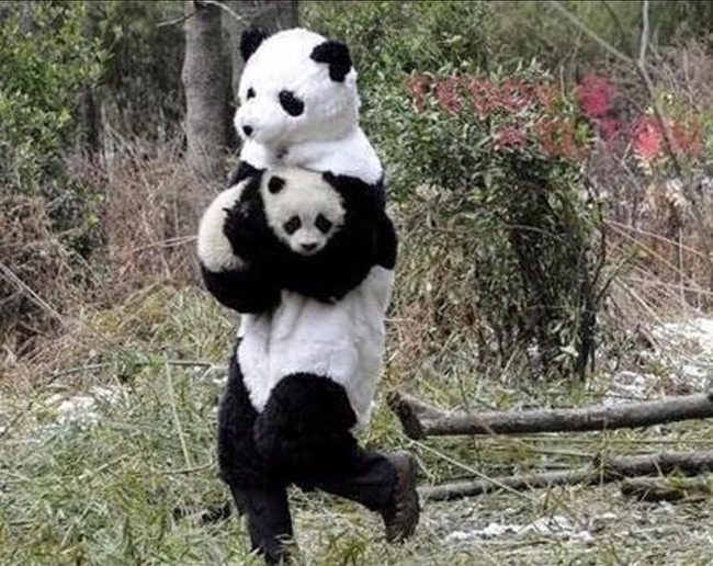 """Its okay panda, i'm your mother now"""
