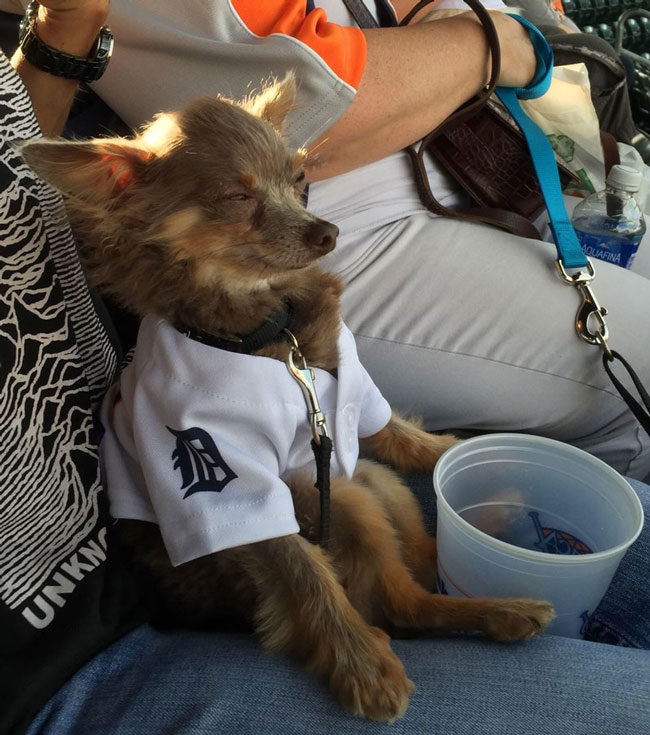 The Humane Society had an event where you could bring your dog to a baseball game. Here's Schmeagle looking less than impressed