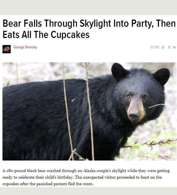 That's my kind of bear
