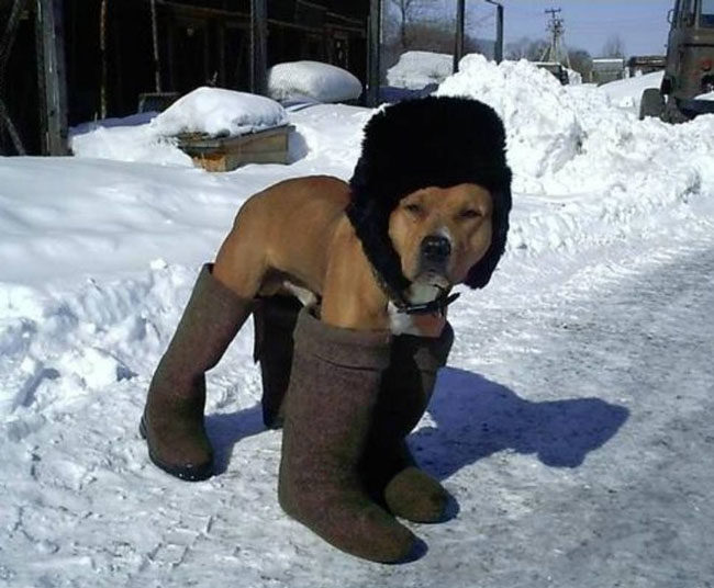 Please keep your dog warm this winter
