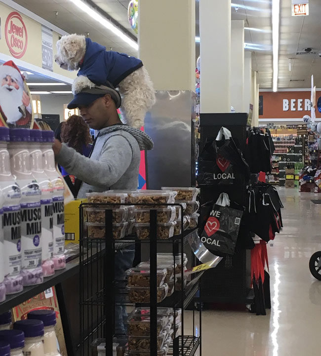 I just saw this guy at the store with a dog on his head...