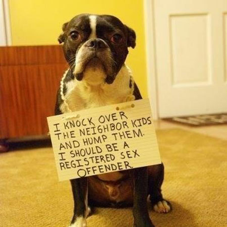 Much deserved pet shaming