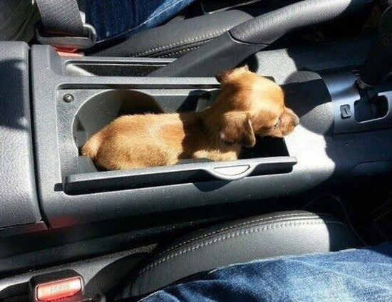 The pup holder