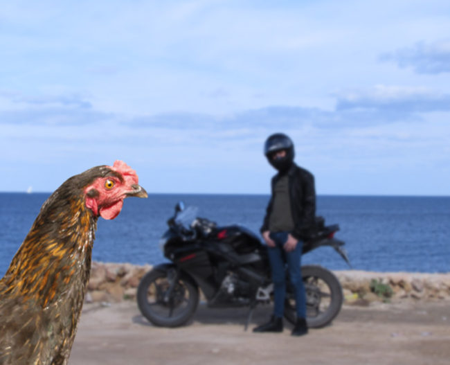 Why did the chicken cross the road? To ruin my picture