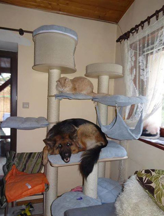 When dog spends too much time with cat...