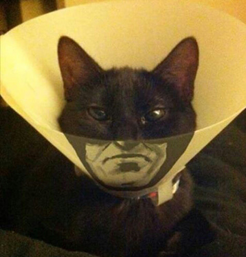 He's the hero Gotham needs right meow
