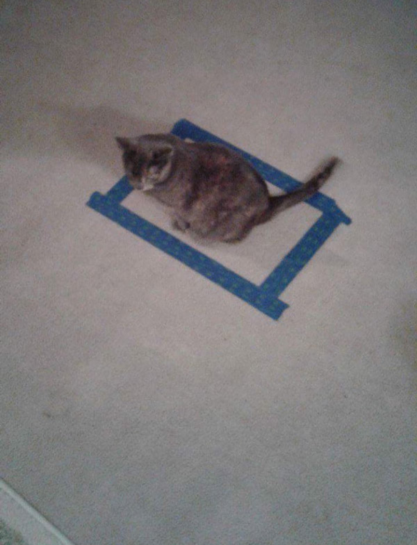 Fun fact: if you tape a square on the floor, your cat will sit in it