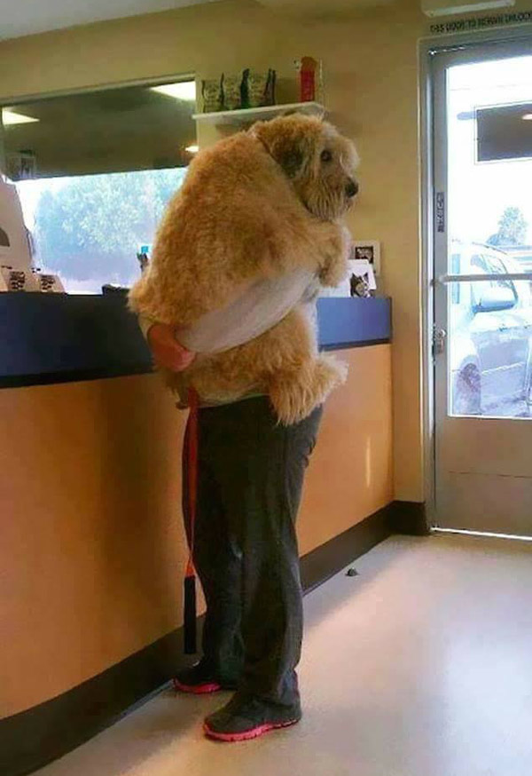 Somebody needed some comforting during a checkup at the vet