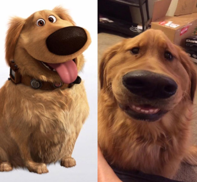 My friend's dog looks like Doug from UP with this Snapchat filter