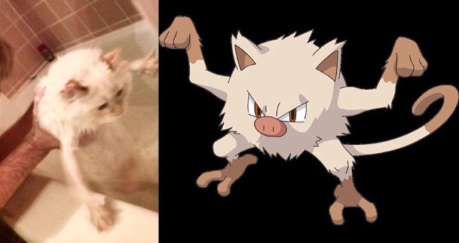 Bathing my cat or catching a Pokémon?