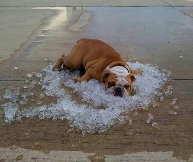 Trying to stay cool in Phoenix