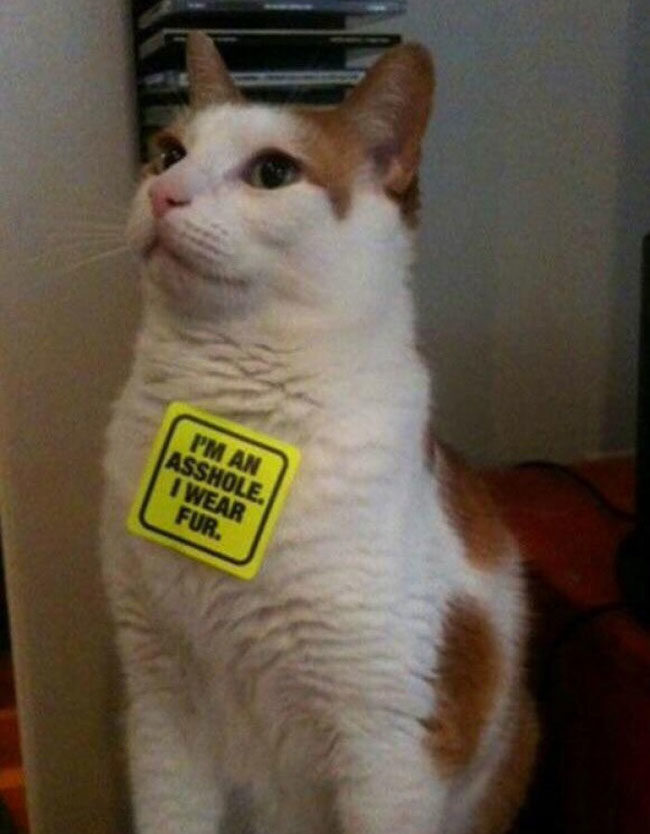 The right way to use peta stickers