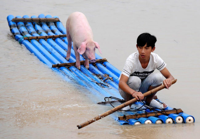 Life of Pi Chinese Edition
