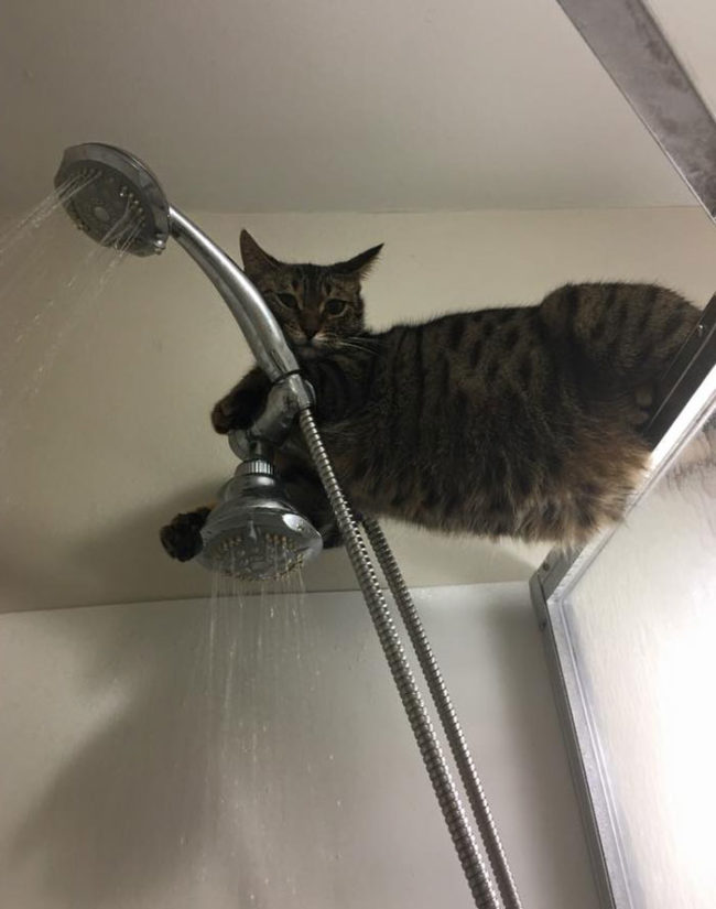 Hey, what are you doing? You taking a shower? That's cool. I'll just hang out here
