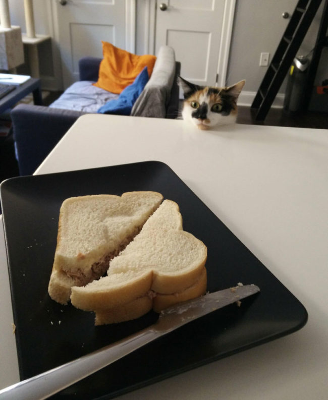 I decided to make a tuna sandwich today
