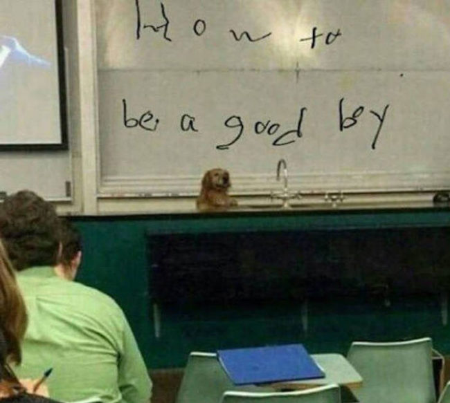 Professor Doggo is one of the most elite at the university