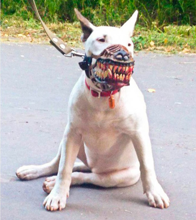 Neighbor said my dog is scary and needs a muzzle..