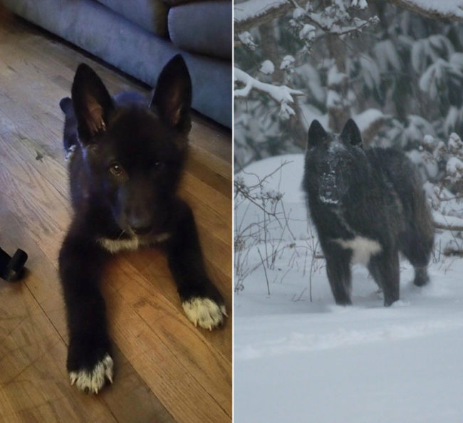 He grew into those ears