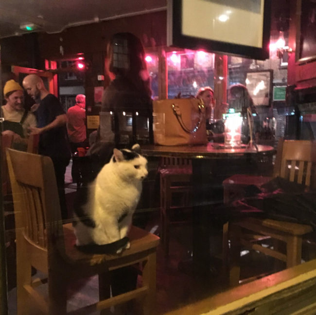 I think this cat's date didn't go well
