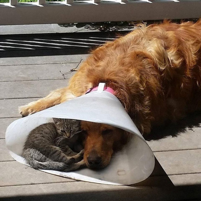 It's nice to have a buddy when you are down and out
