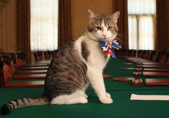 Larry is Chief Mouser to the British Cabinet Office and his official job description is greeting guests to the house, inspecting security defences, and testing antique furniture for napping quality