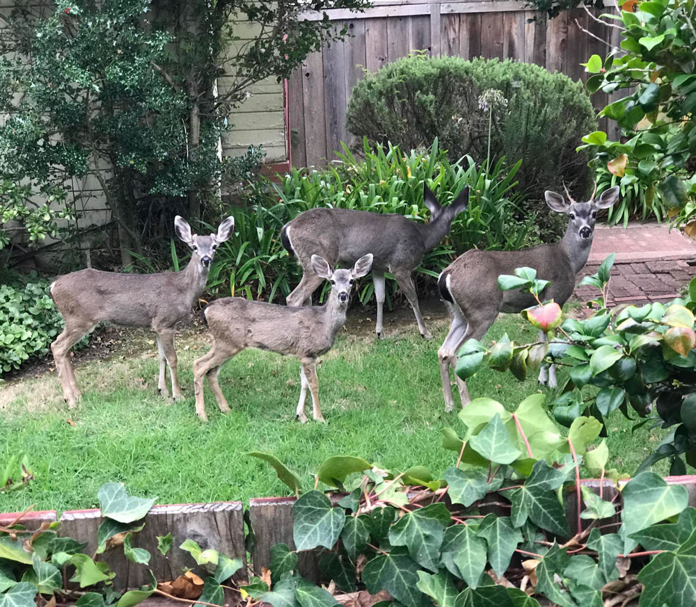 My new neighbor! Heard some noise next door from my backyard, took a peek and see this cute family of four