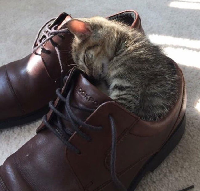 Shoes for scale... and bed