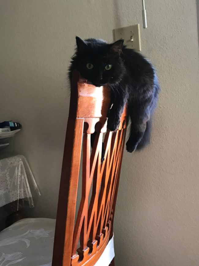 My cat will lay on the chair like this for hours