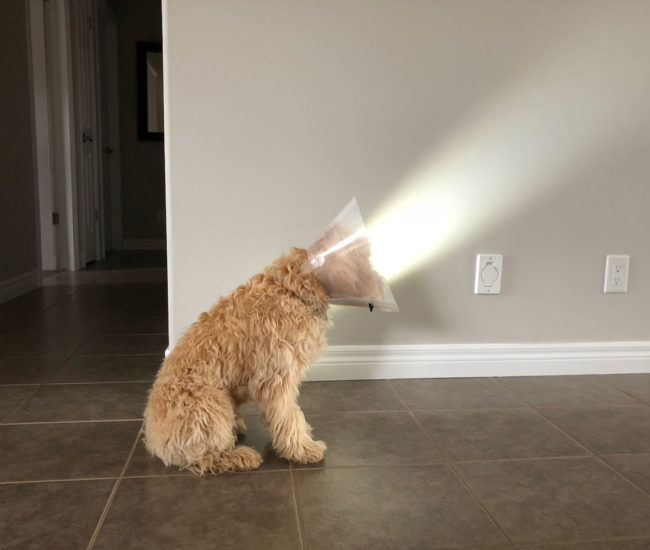 My dog looks like a lamp