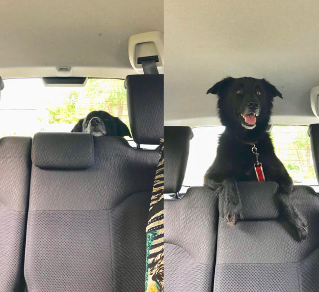 Left before finding out where we were going, right finding out we are at her favorite park