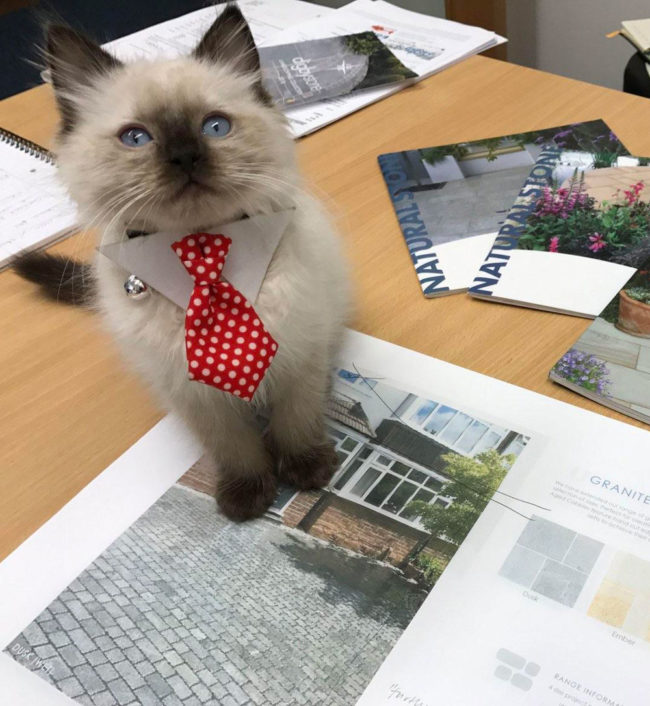 Brought my kitten to work. He dressed for the occasion