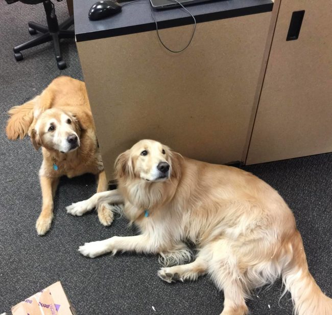 These two dogs belong to the owners of our local post office and have the important job of greeting you when you walk in!