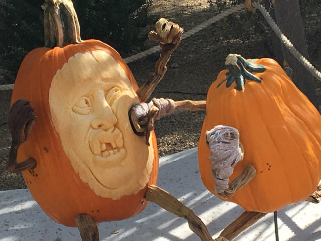Local pumpkin contest had 2 pumpkins boxing