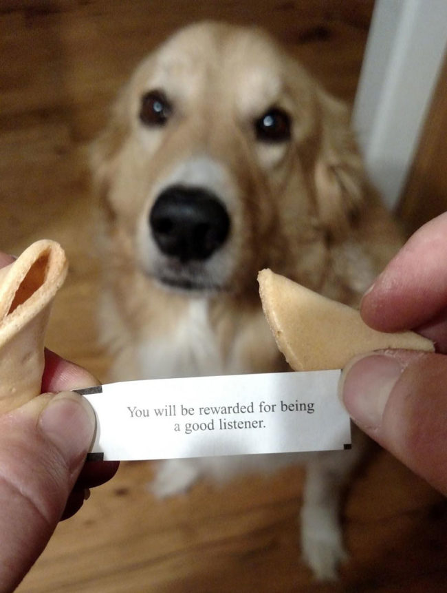 My dog always gets the 3rd fortune cookie from PF Chang's. This was her's tonight