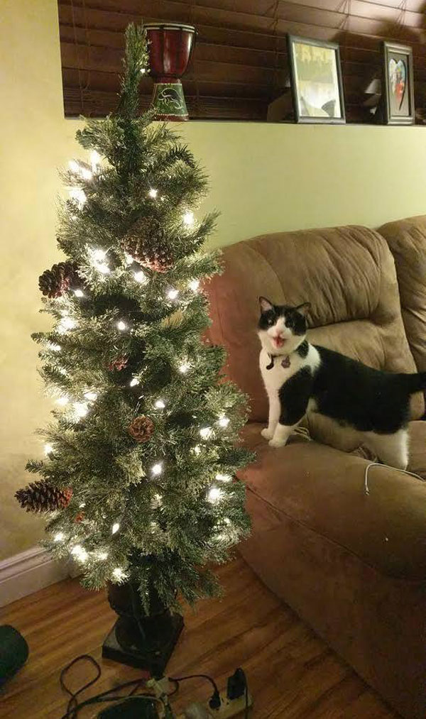 My cat's reaction to seeing a Christmas tree plugged in for the first time