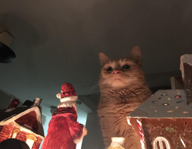 My cat contemplating the destruction of our nativity town