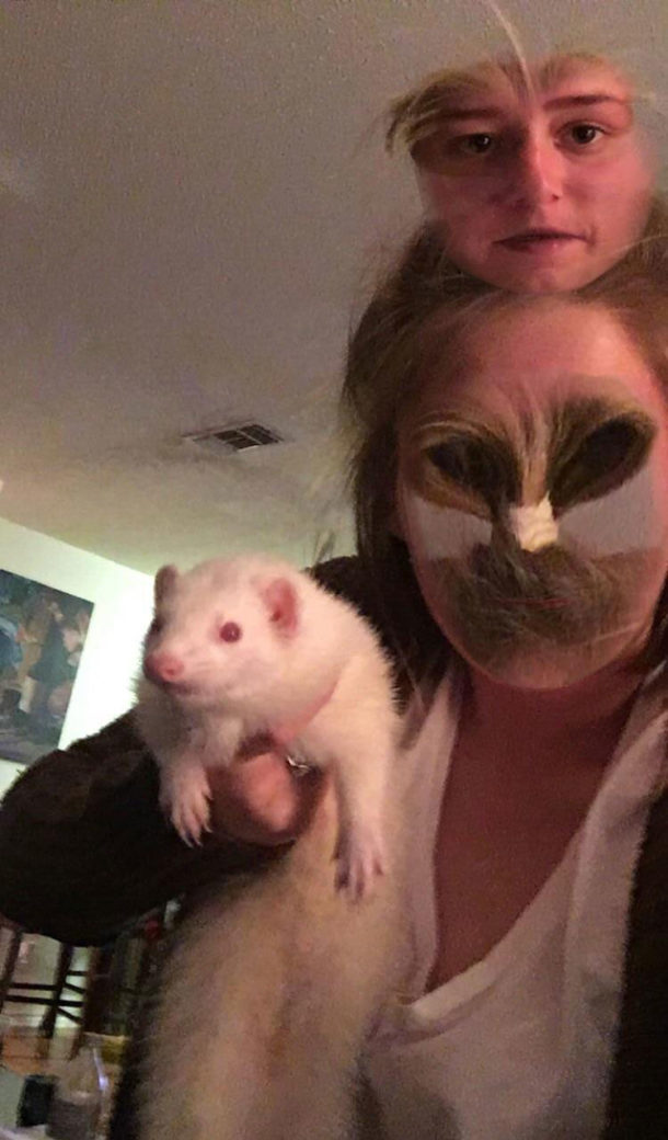 Tried to face swap with this ferret. Didn't quite go as expected