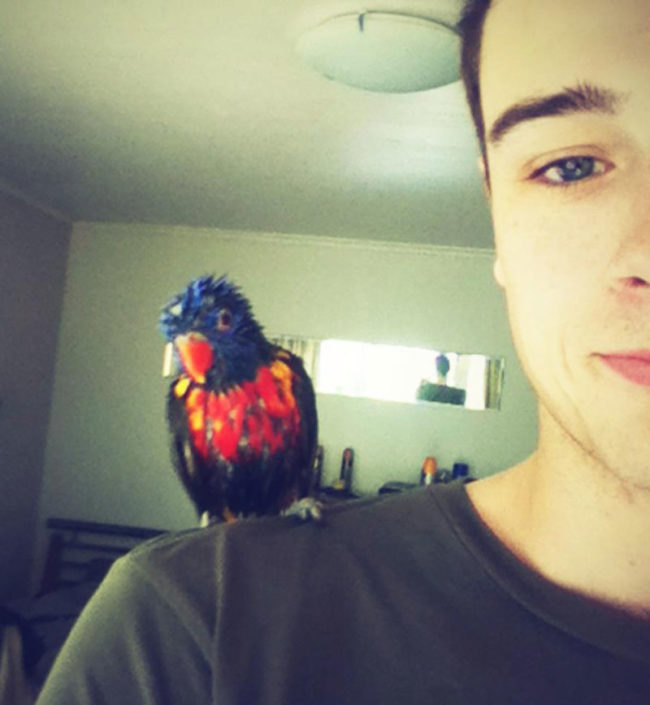 My parrot likes to take a bath every day. He looks funny afterwards