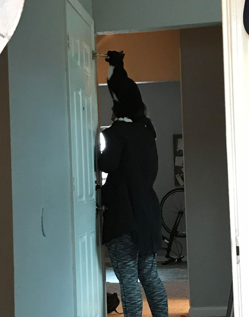 My girlfriend takes Zuko on shoulder expeditions through the house, so he can examine things in high places