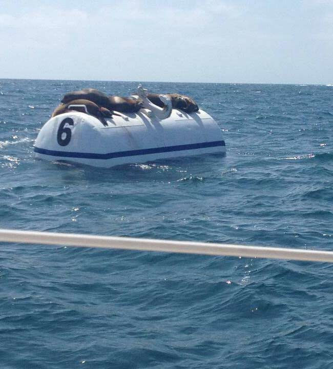 Was out sailing and found Seal Team 6