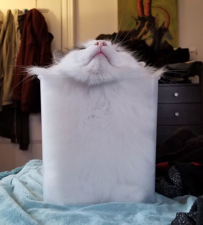 Indisputable proof that cats are liquid