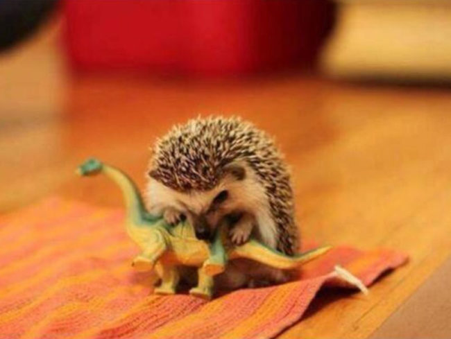 Scientists have uncovered the true cause of extinction of dinosaurs