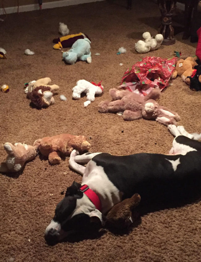 My dog OD'd on stuffed animals and passed out