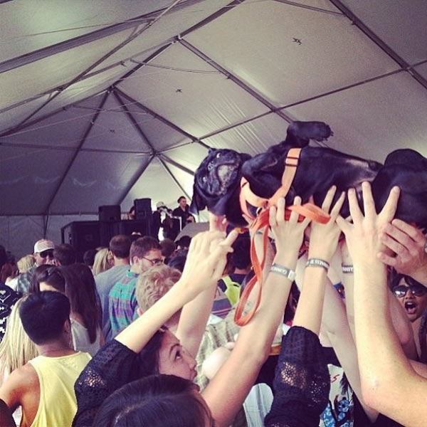 Crowd Surfing Doggy Style!